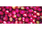 Colombia Huila Region - Wet Process - Green Coffee Beans